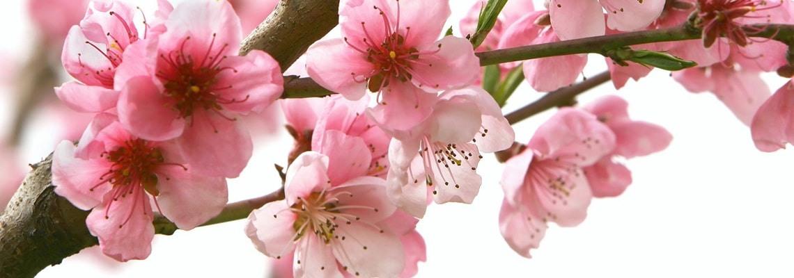 Бытовая техника Sakura